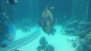 美ら海水族館-こちらを視る魚