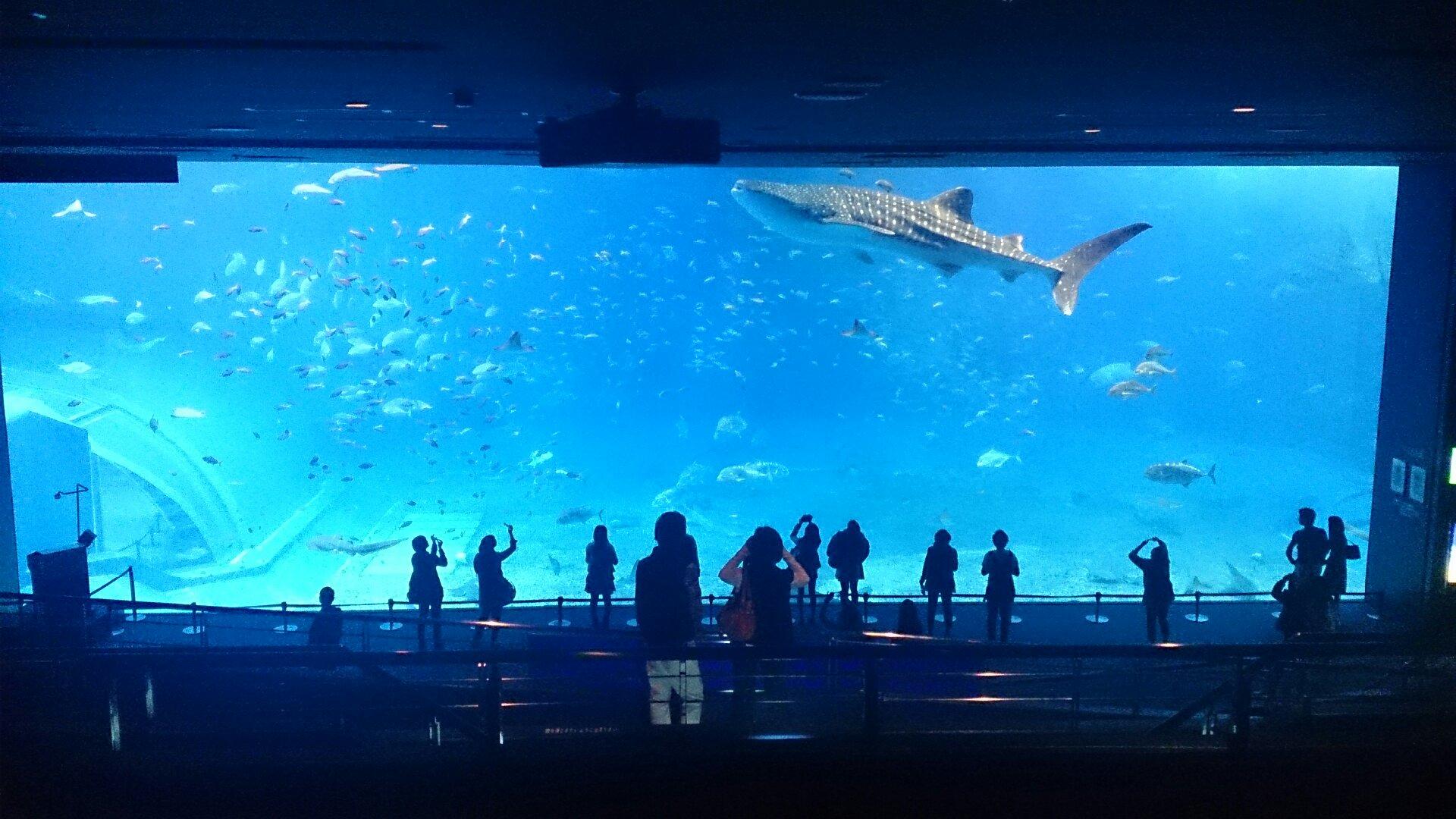 美ら海水族館-「黒潮の海」大水槽再び