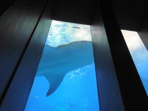 美ら海水族館-レストランからの風景