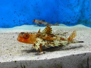 美ら海水族館-小型魚