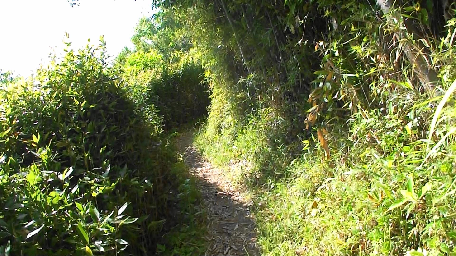 谷干城のお墓へ向かう道2