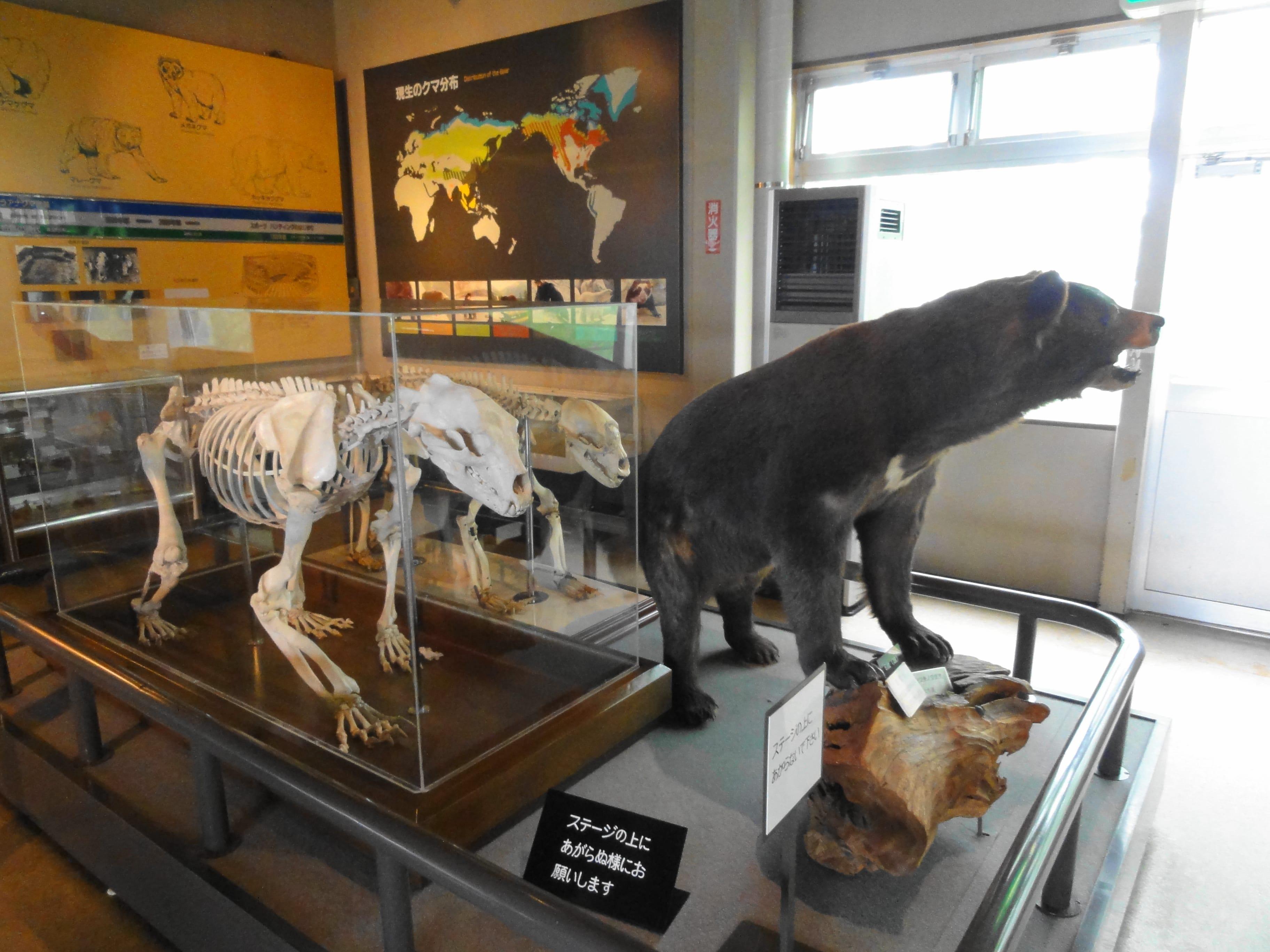 のぼりべつクマ牧場の展示