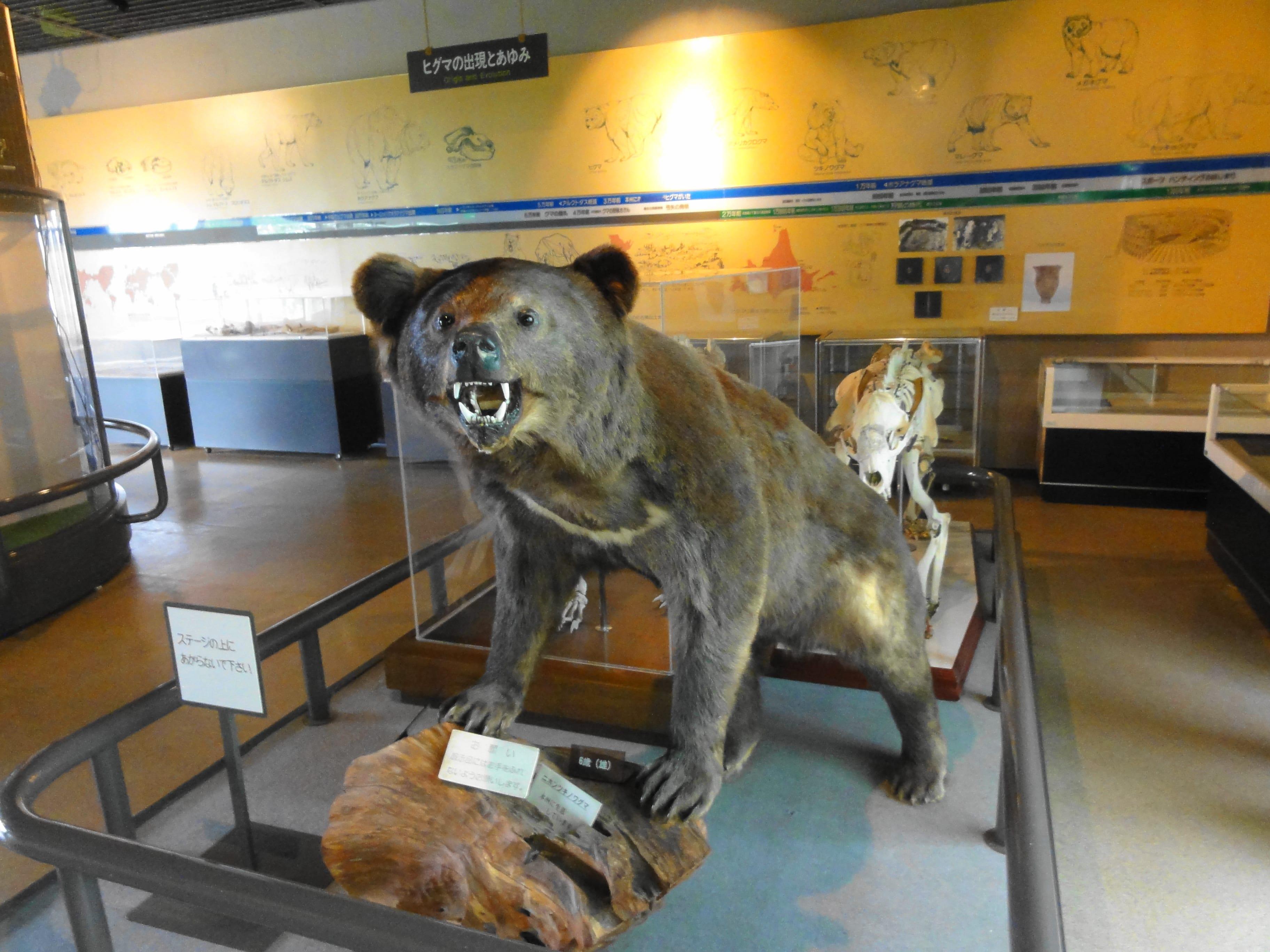 のぼりべつクマ牧場の展示2