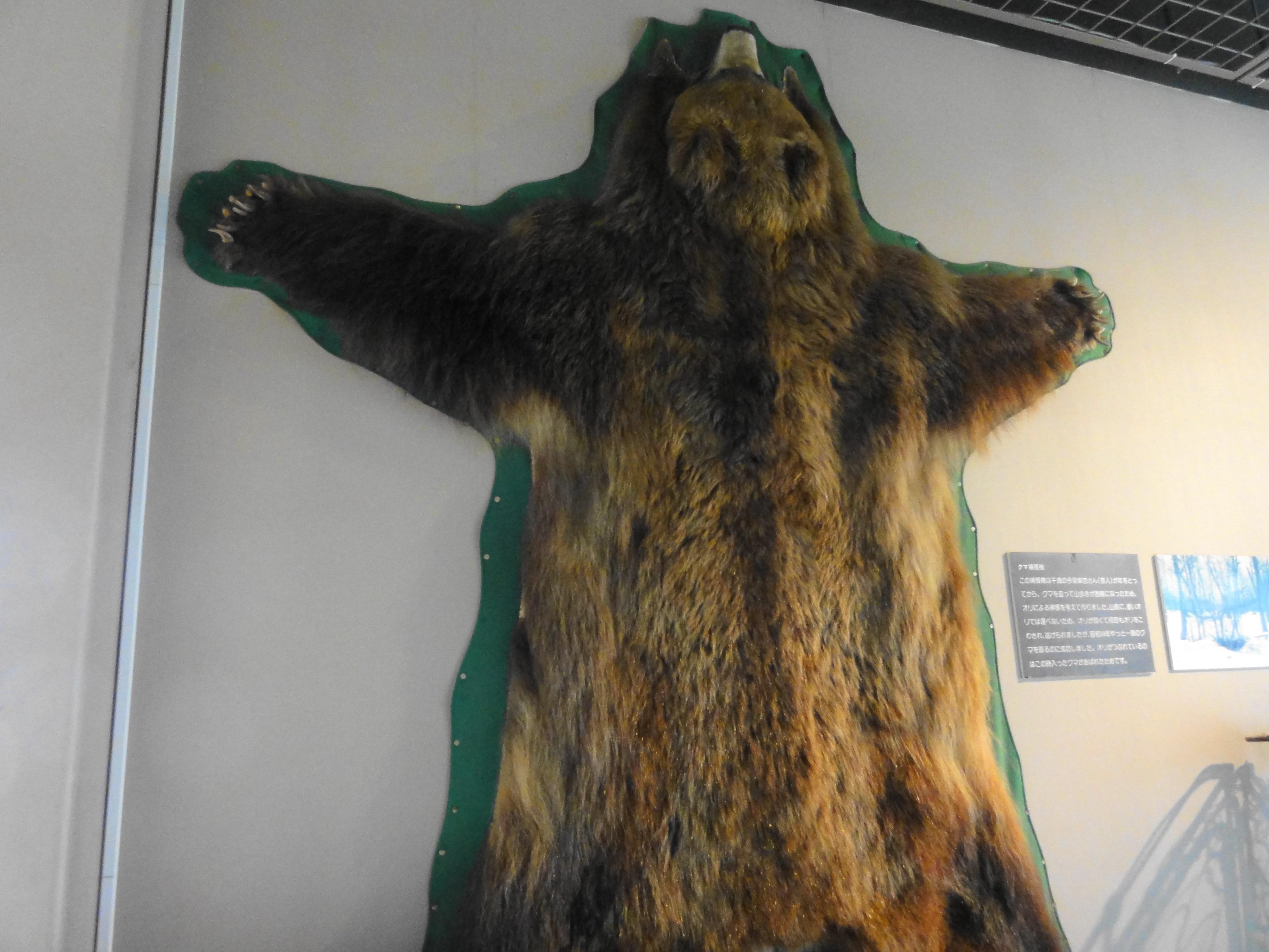 のぼりべつクマ牧場の毛皮