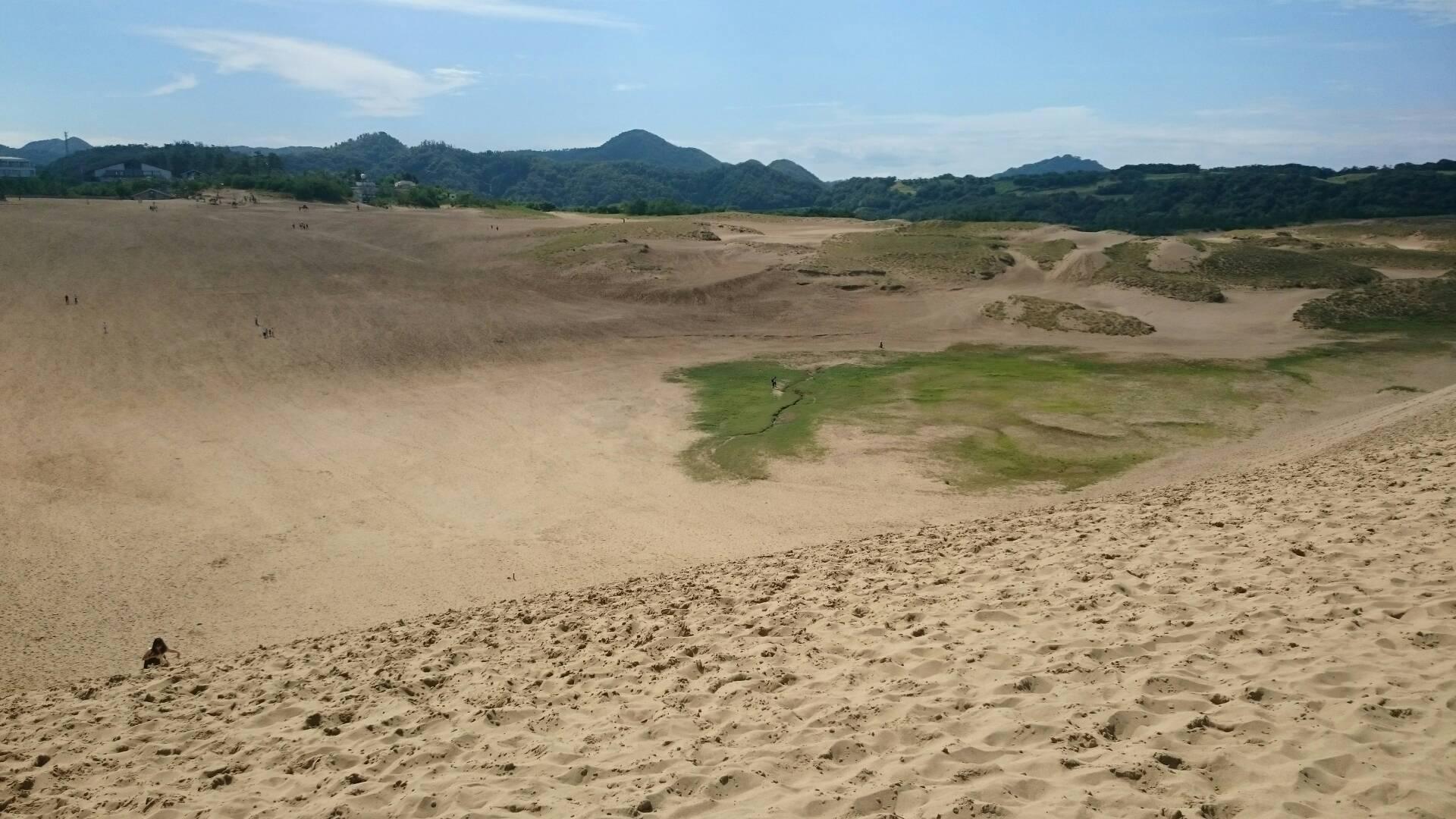 鳥取砂丘の緑