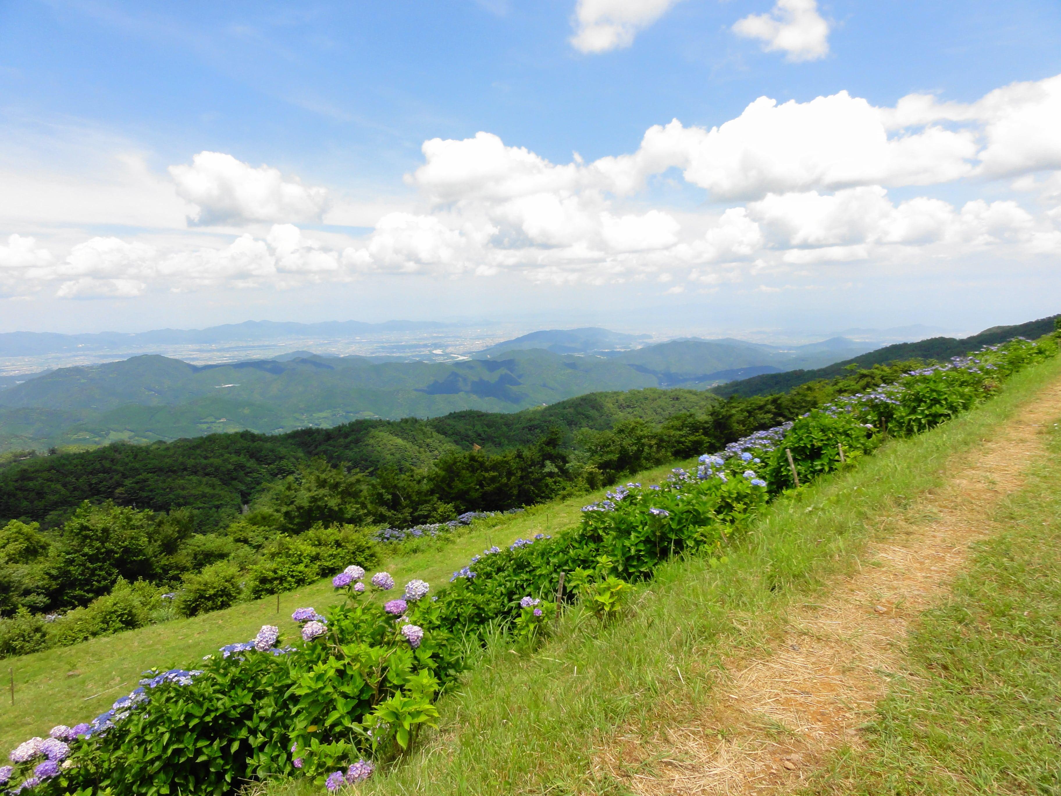 続々、大川原高原の景色