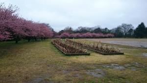 佐倉城前 自由広場