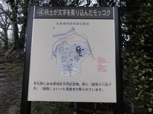 佐倉城 落書きモッコクの説明