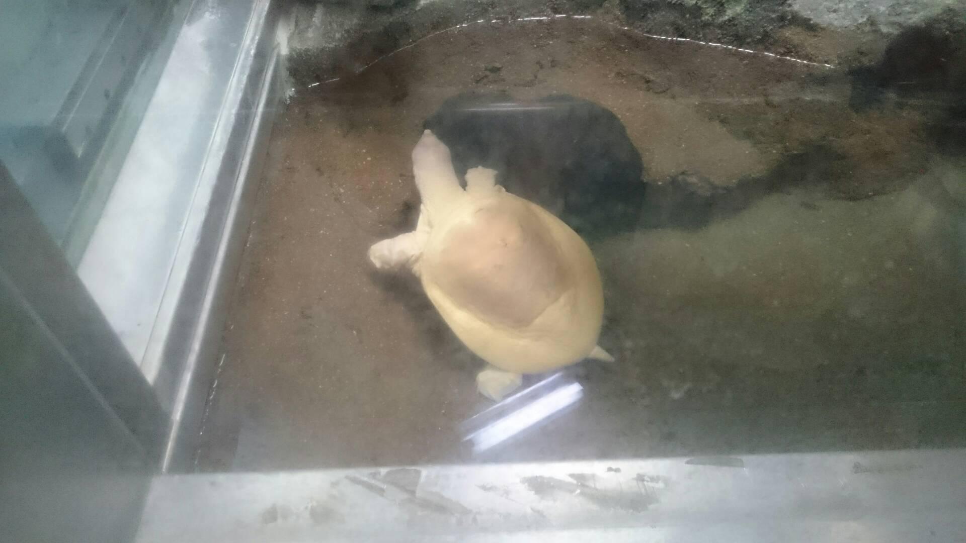 愛媛県立とべ動物園の亀