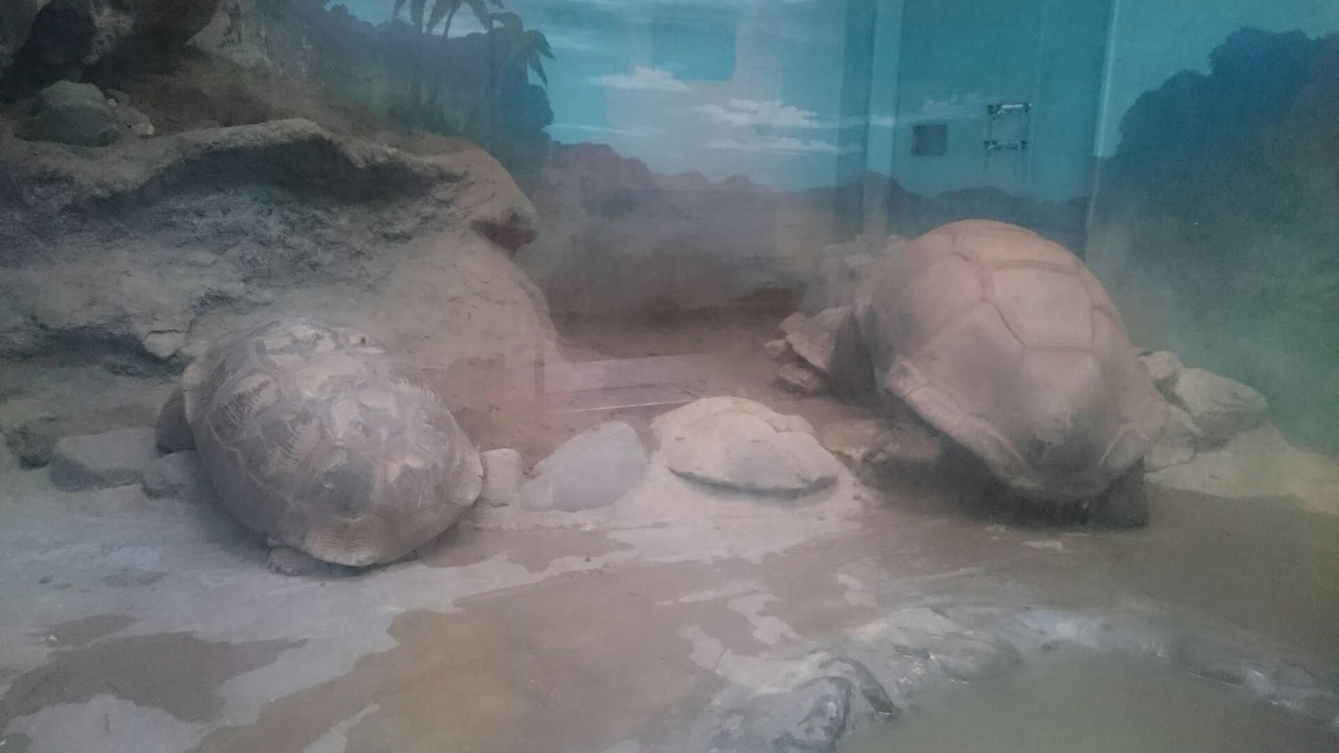 愛媛県立とべ動物園の大亀
