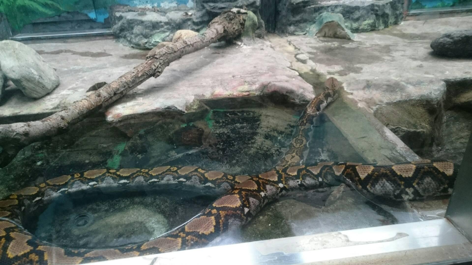 愛媛県立とべ動物園の蛇