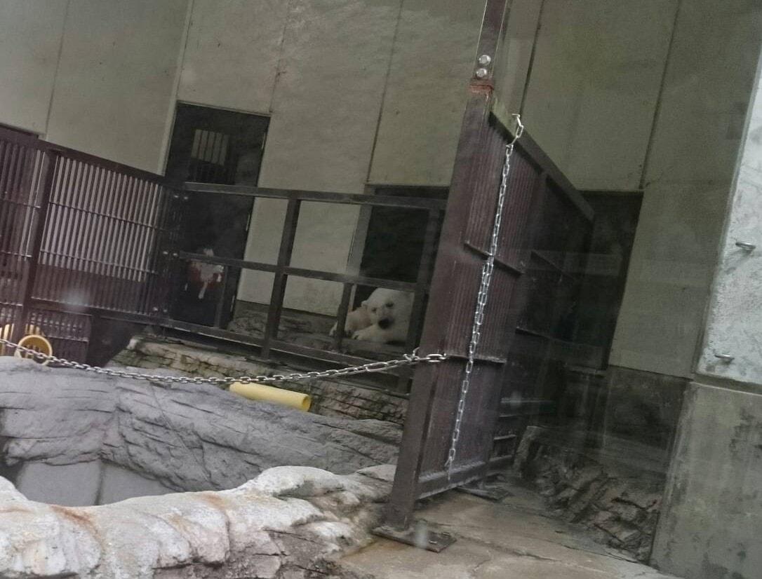 愛媛県立とべ動物園のピース