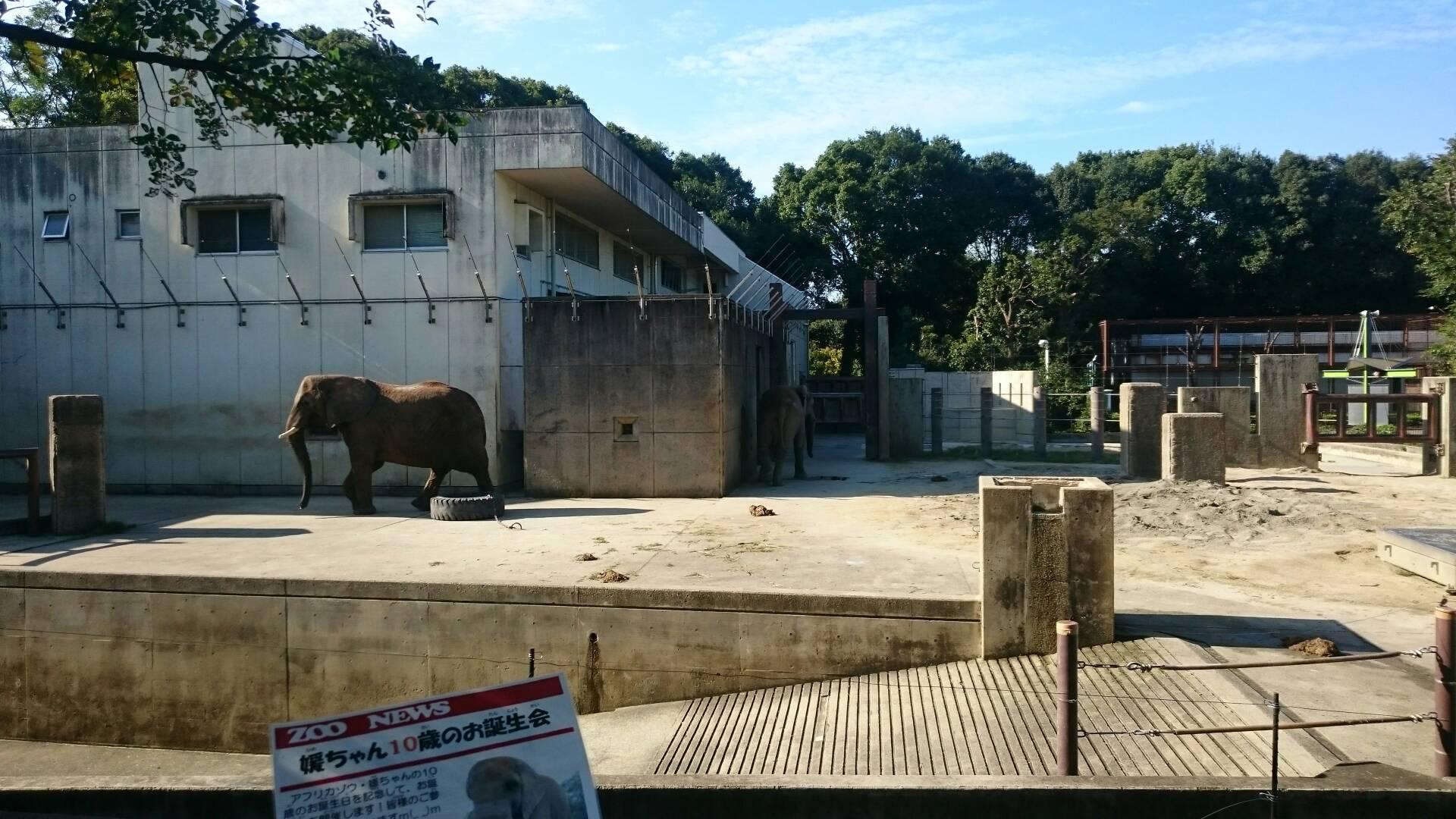 愛媛県立とべ動物園の象