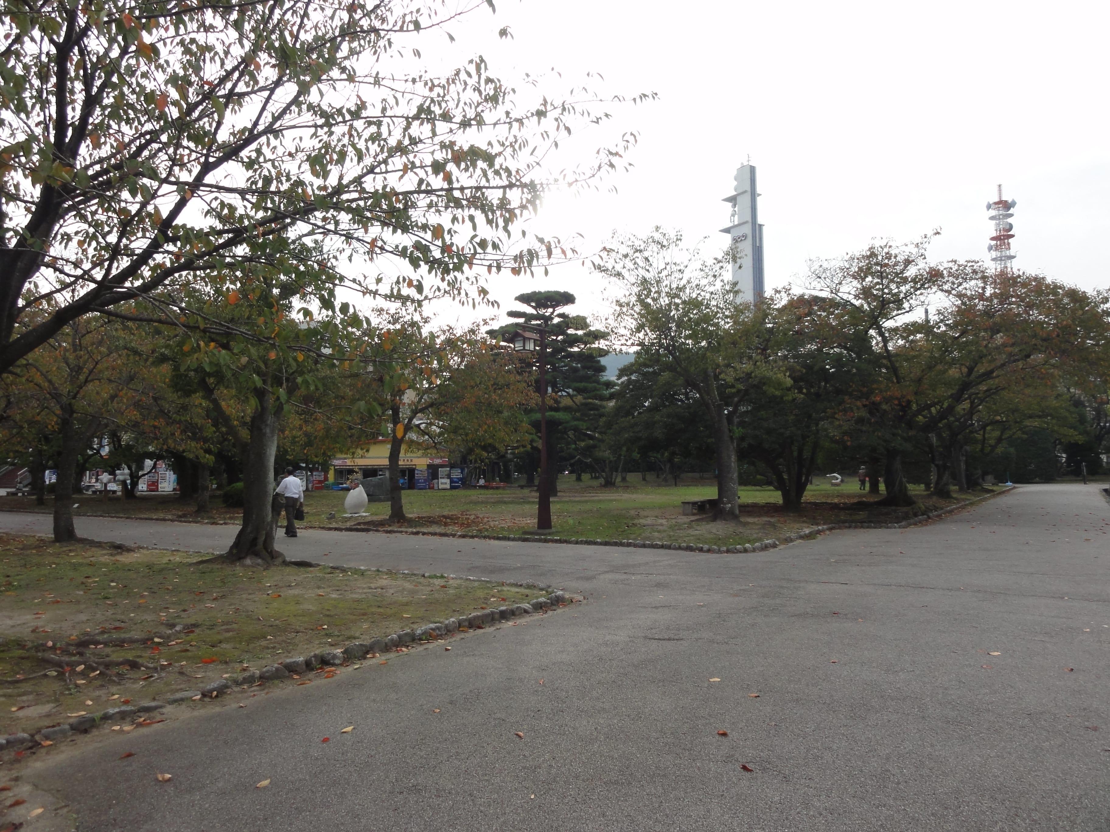 桜の名所 中央公園広場